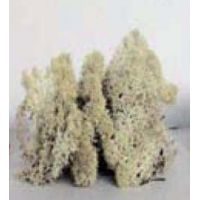 Lichen naturel (100g)