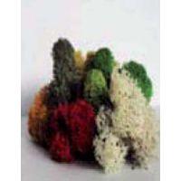 Lichen assorti (100g)