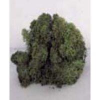 Lichen vert foncé (100g)