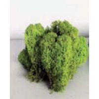 Lichen vert clair (100g)