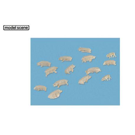 Cochons (N)