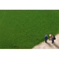 Flocage fibres 4,5mm herbe vert foncé (20g)